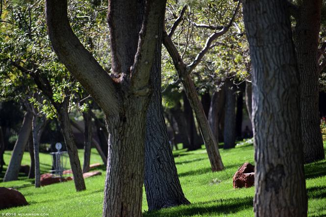 park_treesmcl