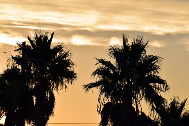 palm-siloet