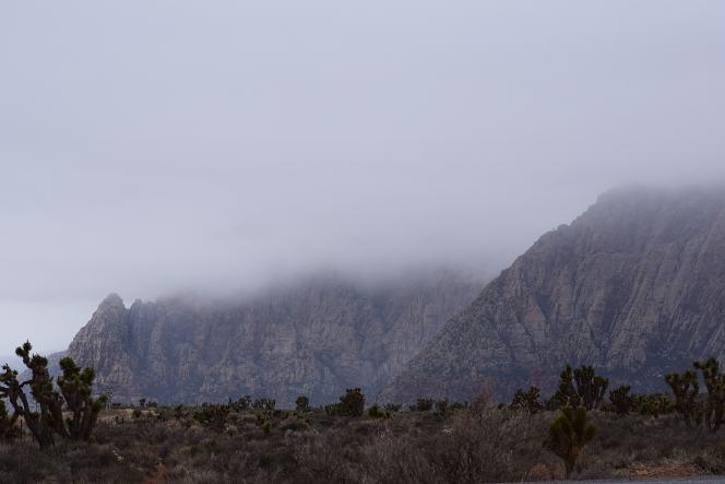 canyon-joshua